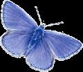 AdonisBlue